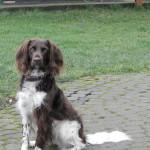 Unsere Dunja ist ein gästefreundlicher Hund.